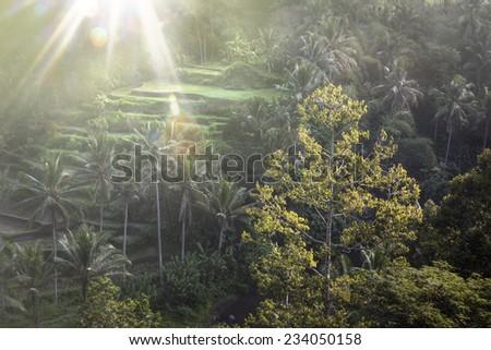 Rice Terraces In Bali, Indonesia  - stock photo