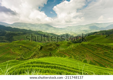 Rice terraces in neighborhood Pingxiang village...