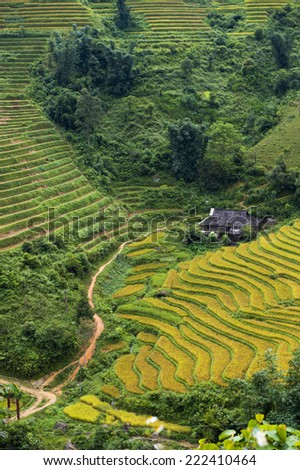 Rice terraces in Northern Vietnam