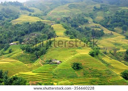 Rice terraces in Sapa - stock photo