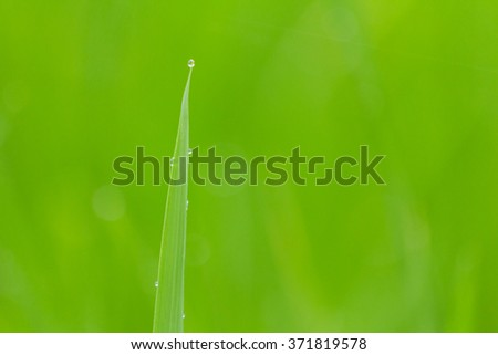 rice with drop of water