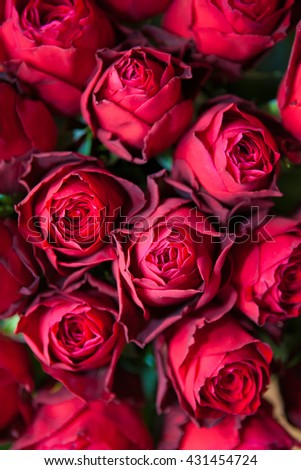 Rich color genuine background. Real purple roses bouquet.