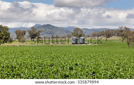 Rich farming country in NSW near Quirindi - stock photo