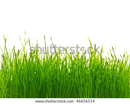 rich green grass with white copyspace for your text