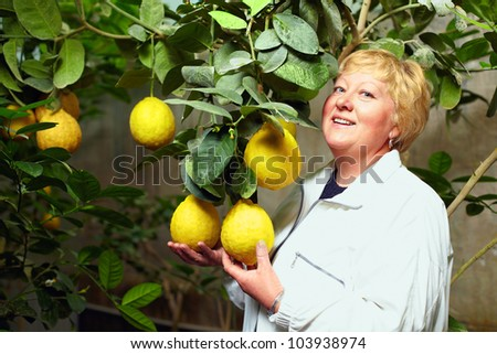 rich harvest and woman selecting the best fruit in greenhouse - stock photo