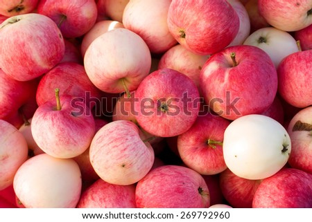Rich harvest of many ripe red apples closeup view natural background - stock photo