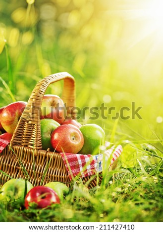 Rich organic apples in a sunlit basket outdoors. Autumn harvest of apples in a basket on a green grass in a sunny garden.