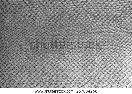 rich texture reptile skin smooth background - stock photo