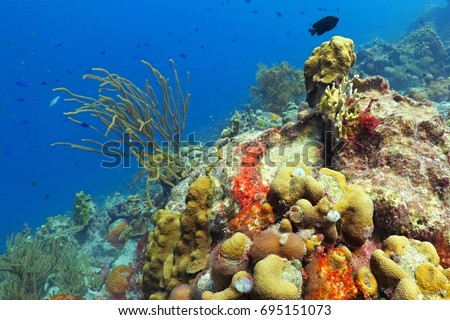 Rich tropical colorful underwater coral reef. Exotic underwater wildlife. Scuba diving in the blue ocean with coral reef.