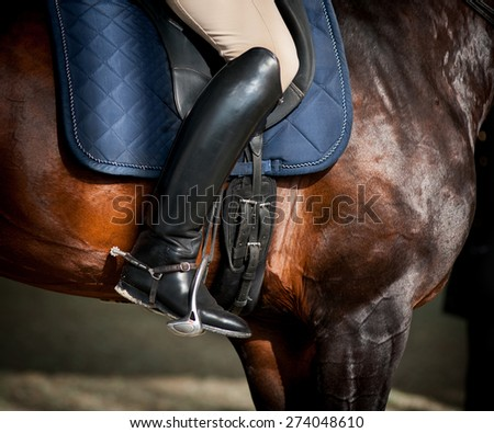 rider on a bay purebred stallion closeup - stock photo