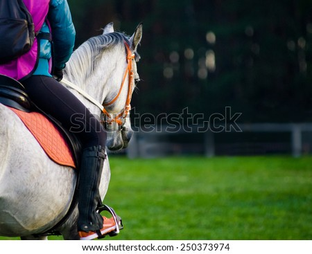 rider on a horse on the equestrian championship - stock photo