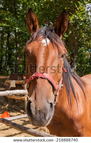 riding domestic horses for recreation and sport - stock photo