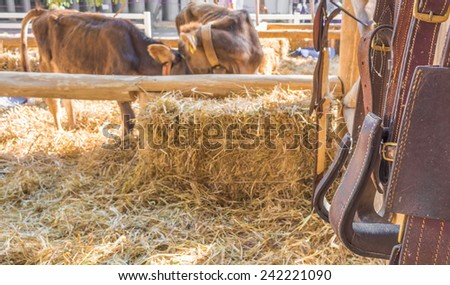 riding horse equipment hang on wooden fence. - stock photo