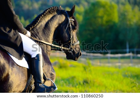 Riding on the black friesian horse in the sunset - stock photo