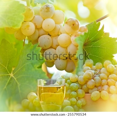 Riesling - green, white grape and wine - stock photo