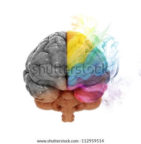 Right and left cerebral hemispheres - creativity and analytical thinking concept - stock photo