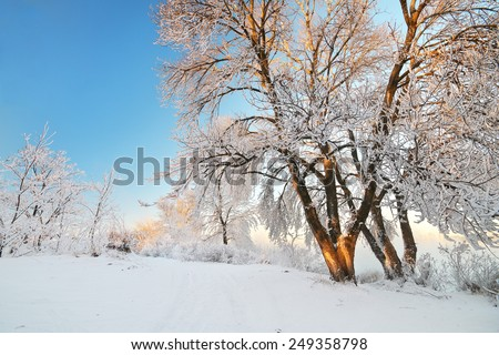Rime on trees. Nature composition. - stock photo
