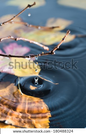 Rings on water surface with submerged autumn leaves