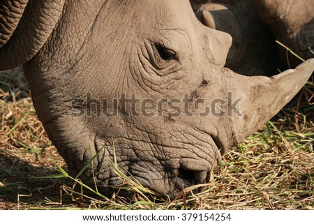 Rino - stock photo