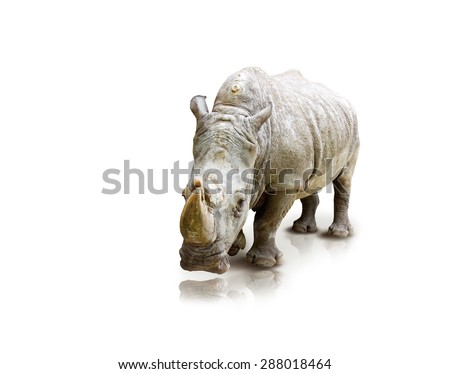 Rino On White Background - stock photo