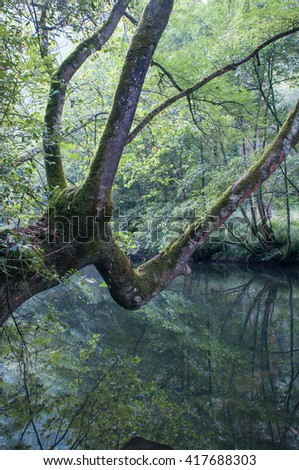 Riparian forest in a spain river