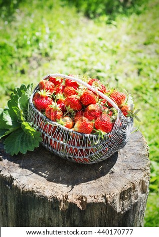 Ripe and tasty strawberries metal a basket on stump in the street on a bright sunny day garden