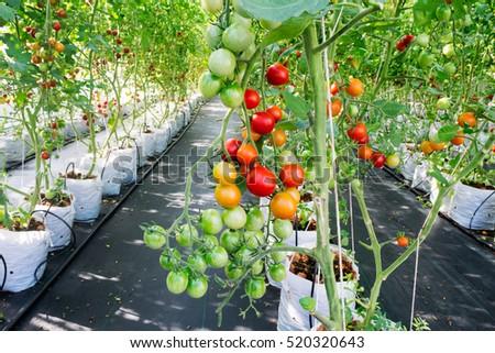 how to grow plants using hydroponics