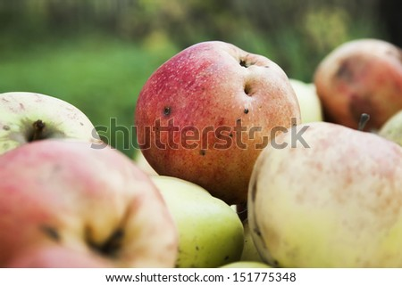 Ripe apples on the table in the garden - stock photo