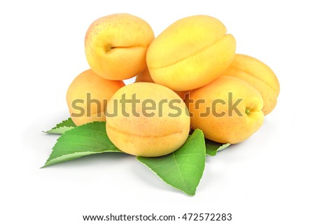 Ripe Apricots with Leaf Isolated on White Background.