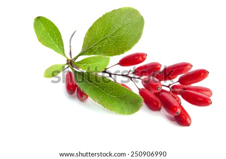 ripe barberries  isolated on white background - stock photo