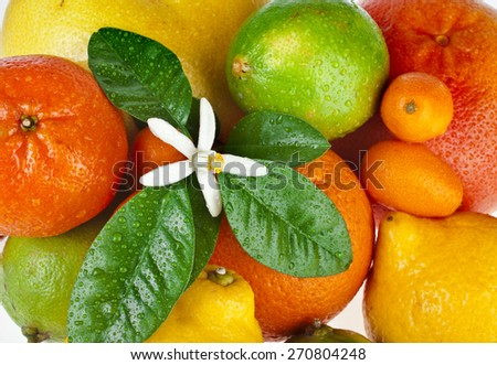 Ripe Beautiful citrus fruits mixed close up  top view background - stock photo