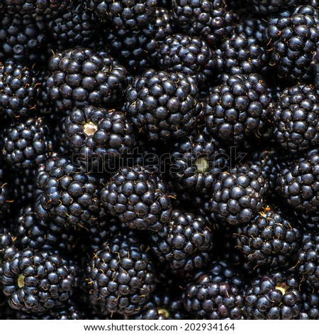 Ripe blackberries background