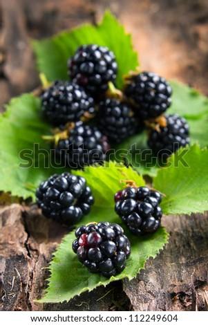 Ripe blackberries on bark in the forest - stock photo