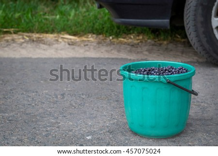Ripe blueberries in a bucket on a road near a car.