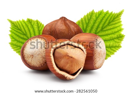 Ripe brown hazelnuts with green leaves on white background