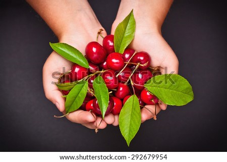 Ripe cherries in hands on dark background - stock photo
