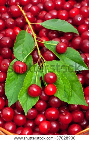 ripe cherries in the basket background