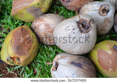 Ripe Coconut fruit heap on green grass  - stock photo