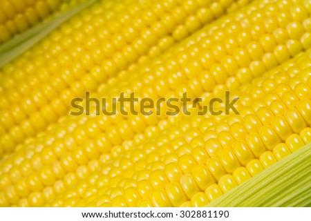 Ripe corn close-up - stock photo