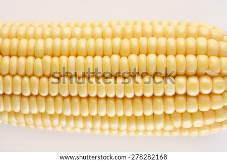 Ripe Corn Close Up Macro View. Fresh Vegetable Texture isolated on White Background - stock photo
