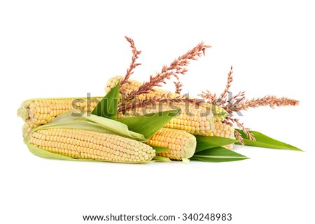 Ripe corn in cobs with flowers and leaves on white background