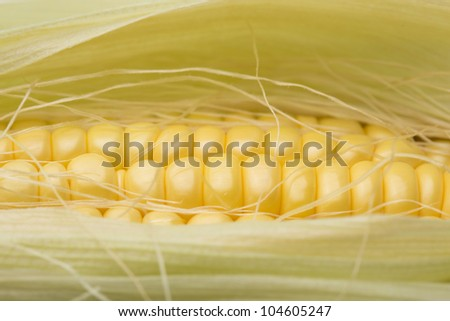 Ripe corn on the White background