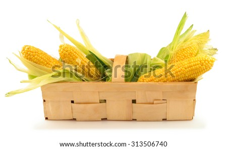 Ripe corn with green leaves in the wooden box isolated on white background - stock photo