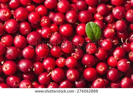 Ripe cranberries. Background of berries - stock photo