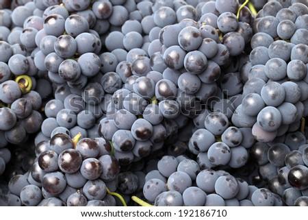 Ripe dark grapes background  - stock photo