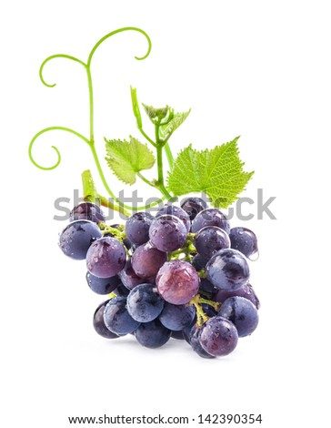 Ripe dark grapes with leaves on white background - stock photo
