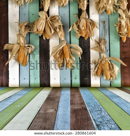 Ripe dried corn cobs hanging on wood wall. - stock photo