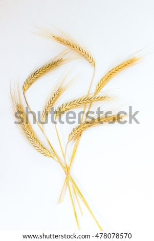 Ripe ears of wheat tied with a rope on a white background