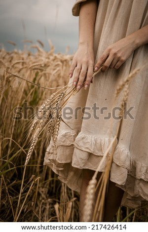 Ripe ears wheat in woman hands against a background of wheat field - stock photo