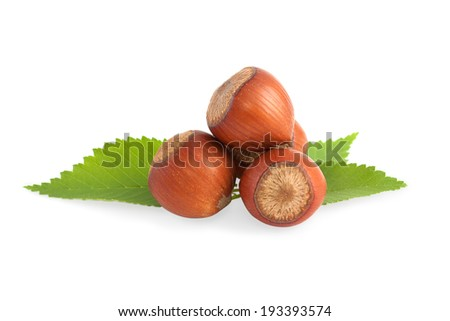Ripe filbert and green leaves  - stock photo